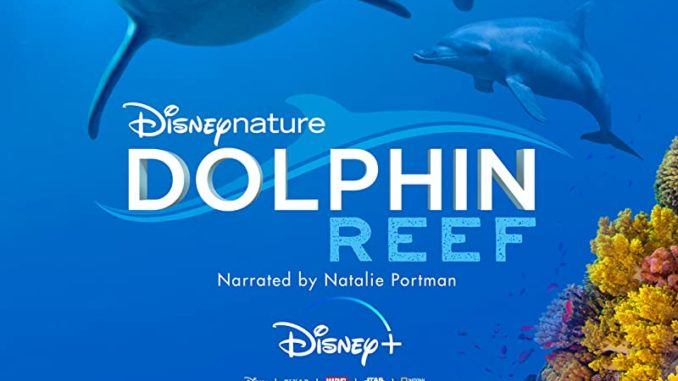 Download Dolphin Reef (2020)